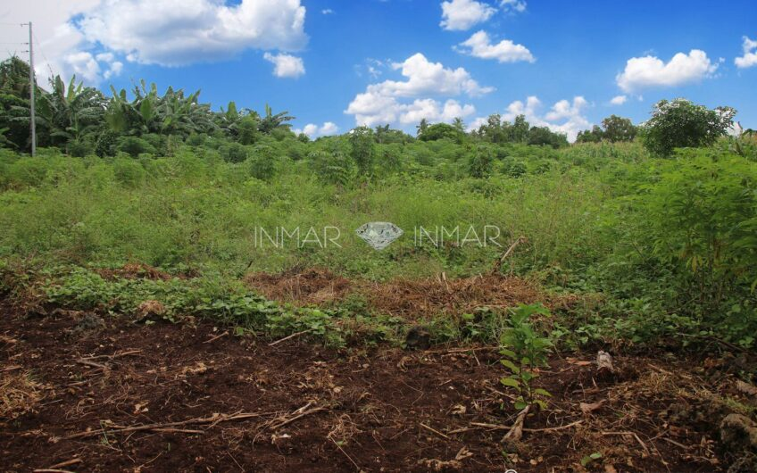 Cheapest Price│Lot for Sale in Camotes!!! Great Business Opportunity – Esperanza